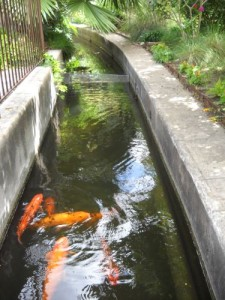 Alamo acequia with koi