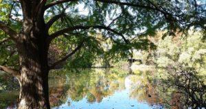 san antonio botanical garden pineywoods pond