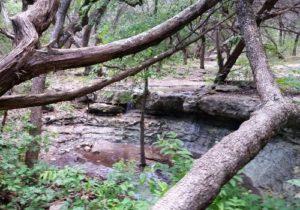 Friedrich Wilderness Park 2015