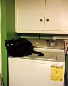 black cat on white washer in green laundry room