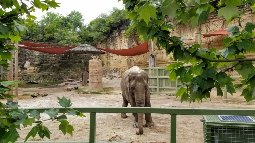 Elephant enclosure, San Antonio Zoo, 2019